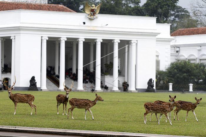 Alih Status Rusa Totol: Sinergi KPKNL Bogor dan Istana Kepresidenan Bogor Dalam Rangka Utilisasi Aset BMN
